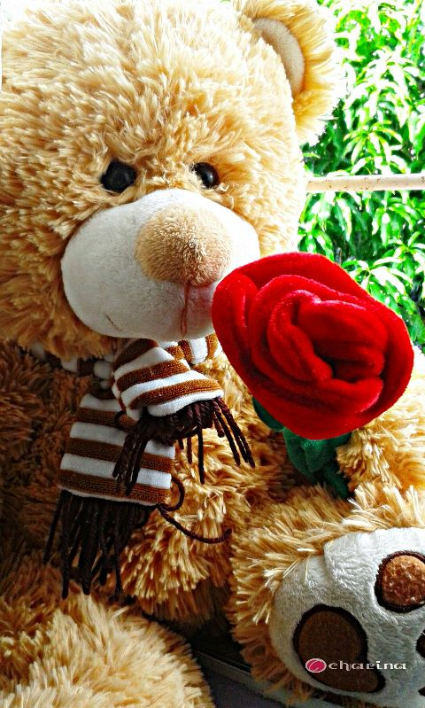 teddybear love cute valentine valentinesday
