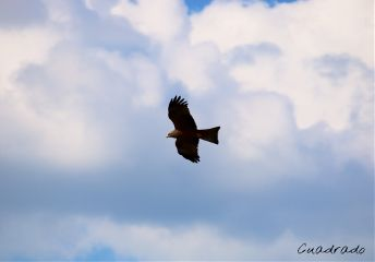 pets & animals photography travel nature golden eagle