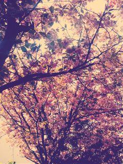 color splash colorful flower love nature