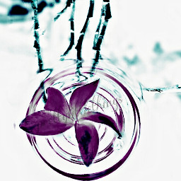 photography watereffect negative emotions flower