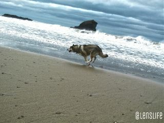 photography dogs pets & animals beach sky
