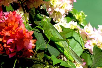 pets & animals nature macro flower