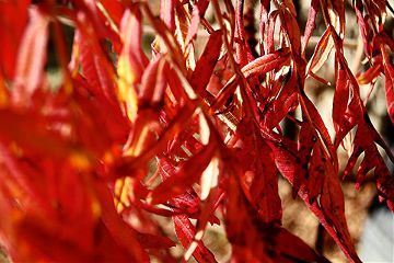 colorful red photography nature leaves