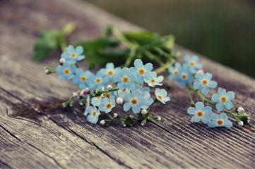 spring photography nikon nikond90 nature