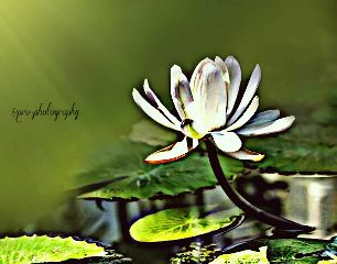 beautiful flower hdr nature photography