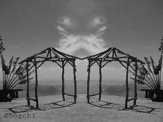 black & white nature old photo photography summer