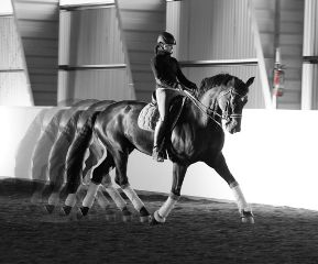 horse motion blackandwhite motiontool dressage