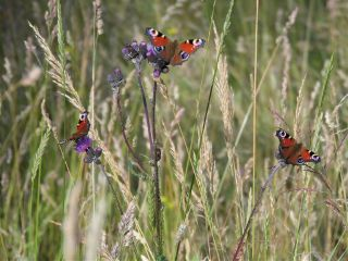 nature photography pets & animals summer freetoedit