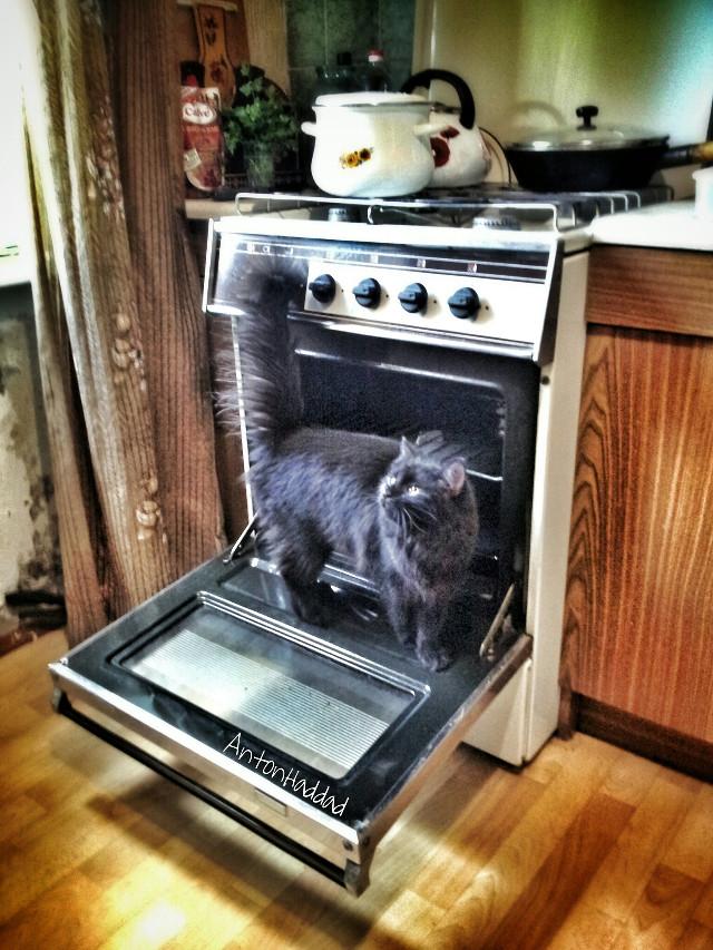 let me help u bake the cake 😆 (mosya)