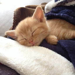 pcstayinbed stayinbed pcsleepy sleepy pchappiness pccutepets pcpets pchappypetday