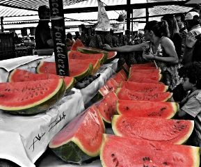 red watermelon harvest