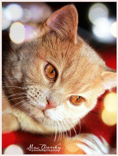 cat animals cute portrait photography