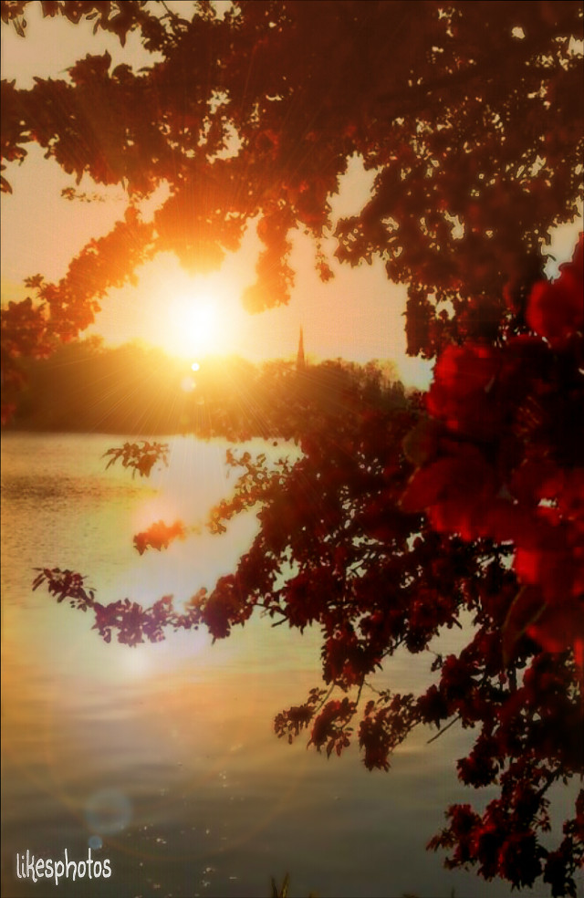 Good Morning ... I wish you all a lovely day my friends ♡  Friends are the sunshine of life. John Hay  #emotion #quotes #photography #nature #sun #blur