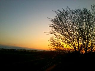 sunset branch sky photography nature