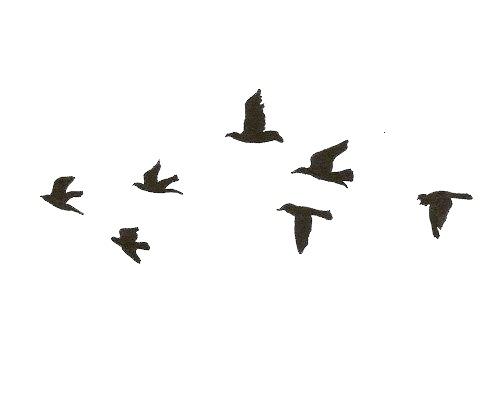 transparent transparents overlay overlays birds bread