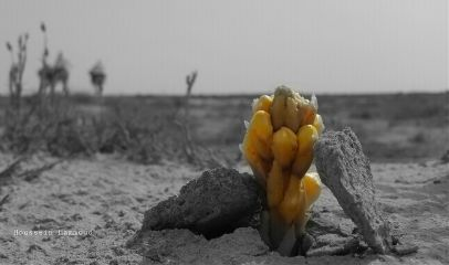 desert flower photography camel freetoedit